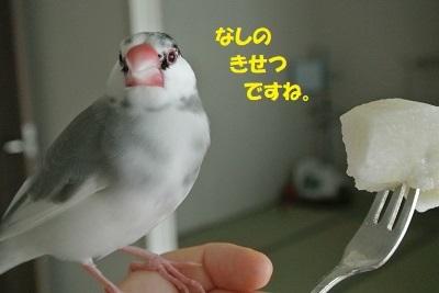 DSC_7874済