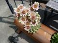 ナンフェア 多肉の花束