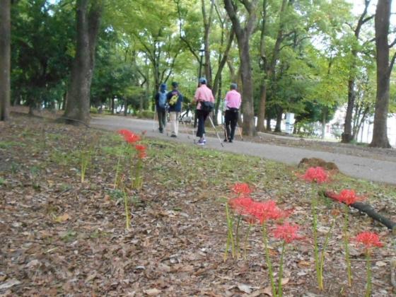 彼岸花と清澄公園