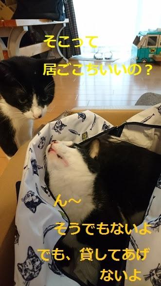 にゃんこin the bag