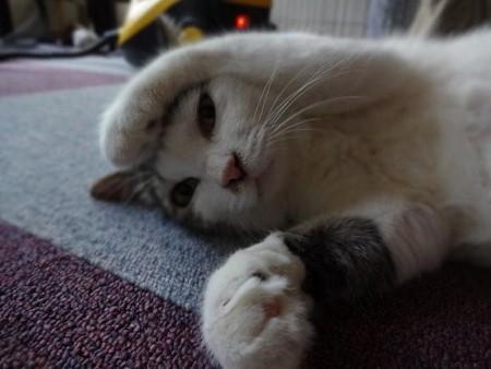 cat164-7[1] (450x338)