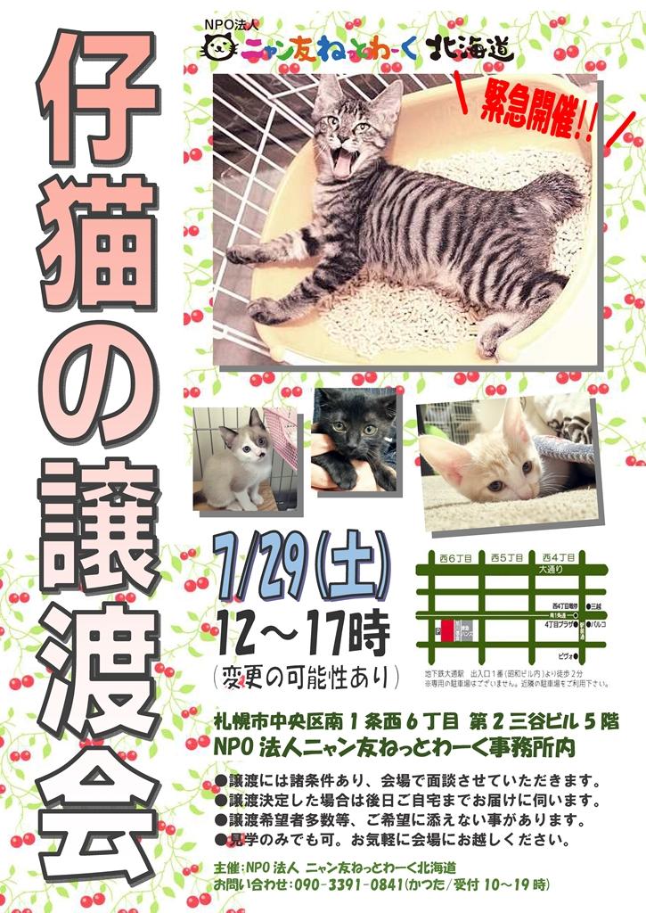 7月仔猫緊急_R