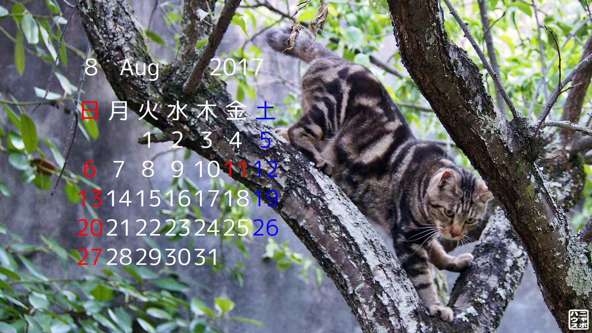 2017年8月 猫デスクトップカレンダー