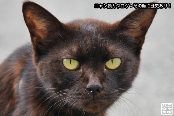 ニャン顔NO102 クロ猫さん