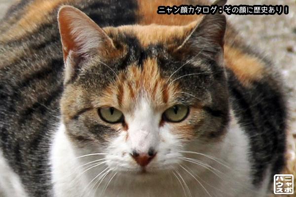 ニャン顔NO97 三毛猫さん