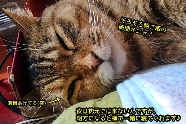 ニャポ団長 猫 枕元
