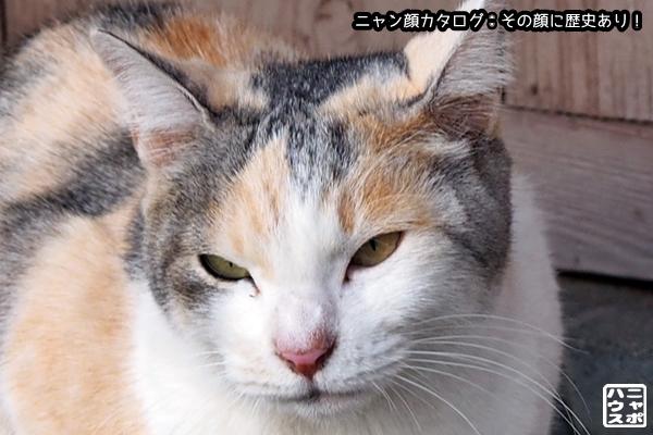 ニャン顔NO89 三毛猫さん