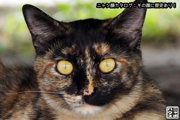 ニャン顔NO91 サビ猫さん