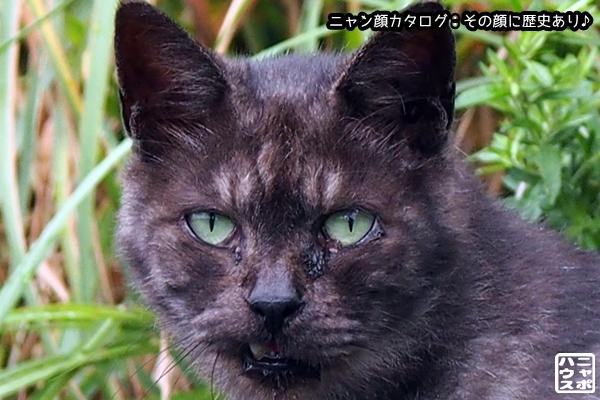 ニャン顔NO93 ハイクロ猫さん
