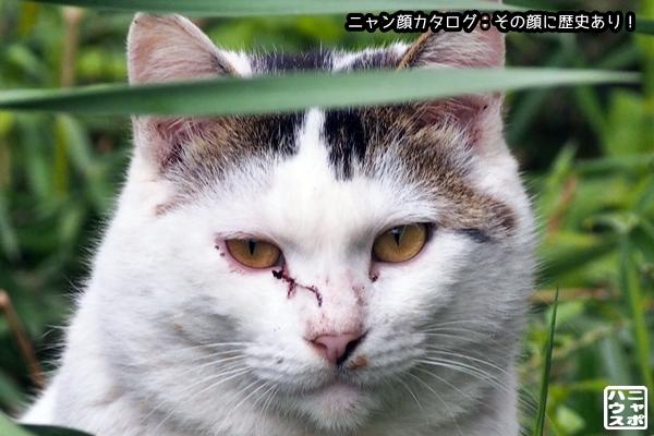 ニャン顔NO92 シロクロ猫さん