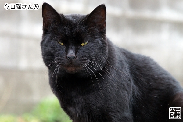 黒猫さん比較