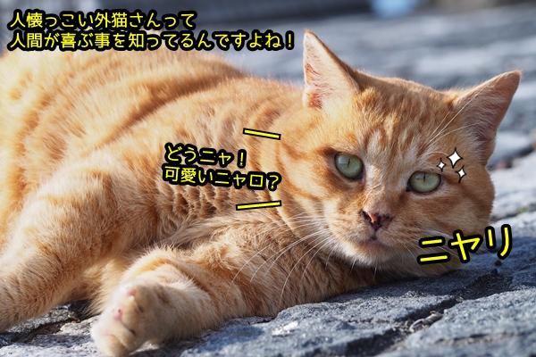 ちゃとら猫