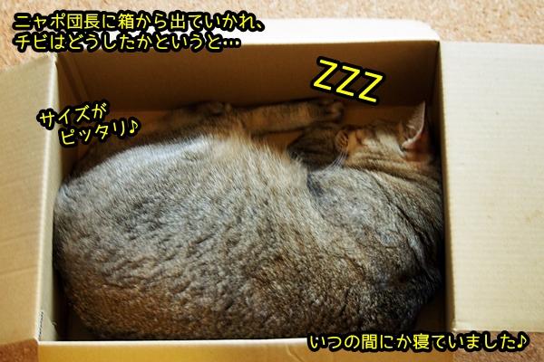 箱入り娘 猫