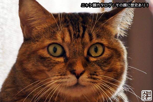 ニャン顔NO100 ニャポ猫さん