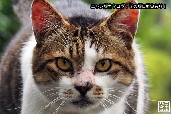 ニャン顔NO99 サバトラ猫さん