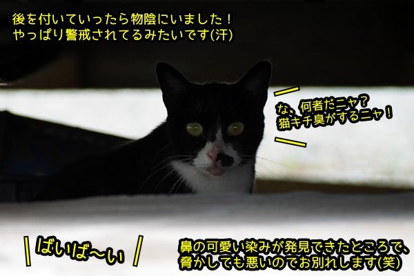 ニャポ旅41 帰省だけどやっぱり猫散策♪ 前編