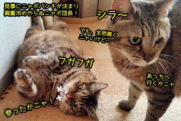 ニャポ猫パンチ