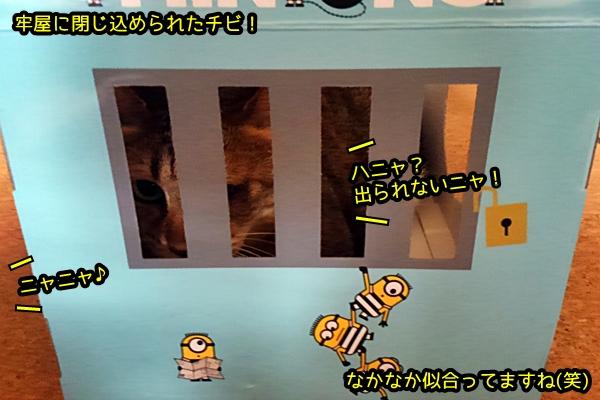 牢屋 ワガママ猫チビ