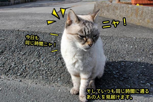 シロトラ猫