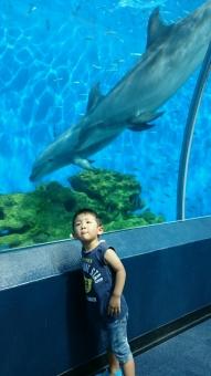 イルカとパチリ