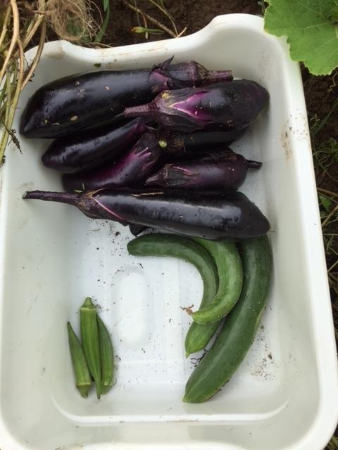 0720収穫1