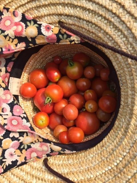 0726収穫2