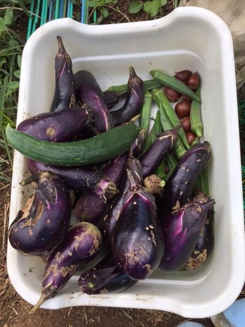 0823収穫