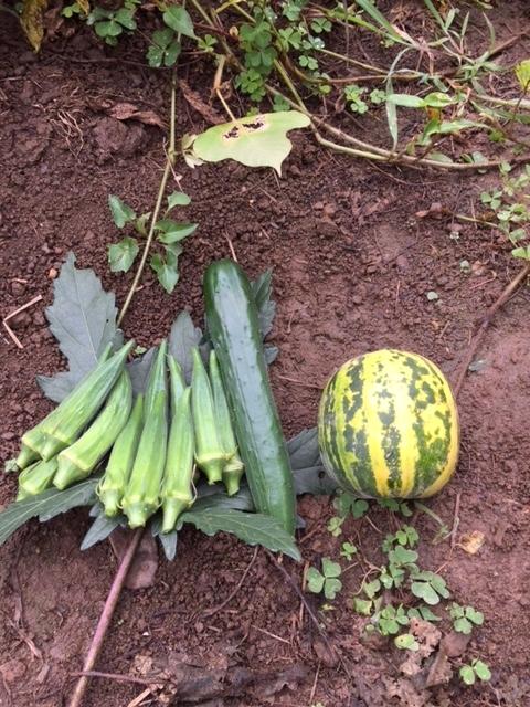 0905収穫