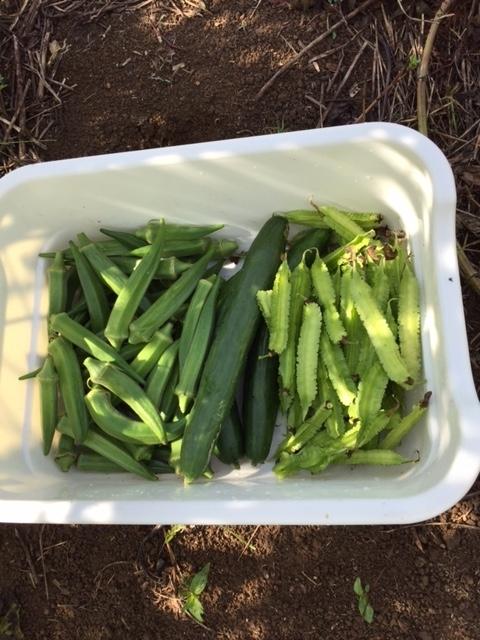 0913収穫