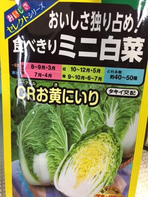 0914ミニ白菜