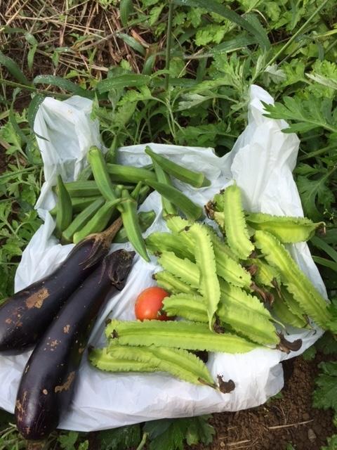 0919収穫