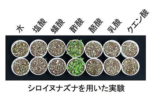 植物に酢酸を与えると乾燥に強くなる