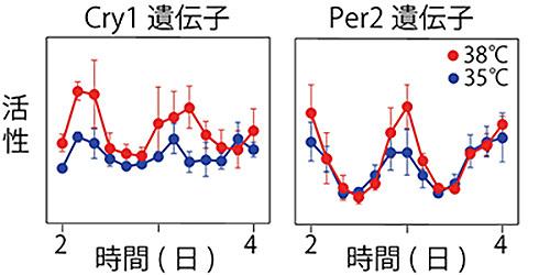 体温が低いときの変温動物の体内時計はゆっくり進み、病気で熱を出している人の体内時計は早く進むのか?