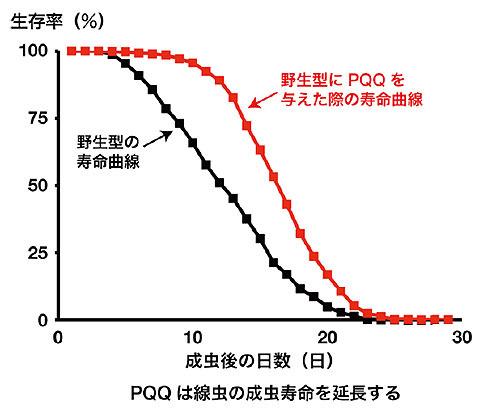 PQQがもたらす寿命延長の仕組み
