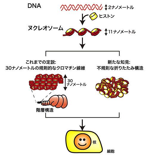 ヴォイニッチの科学書 Chapter-663 DNAの不規則な塊を世界で初めて確認