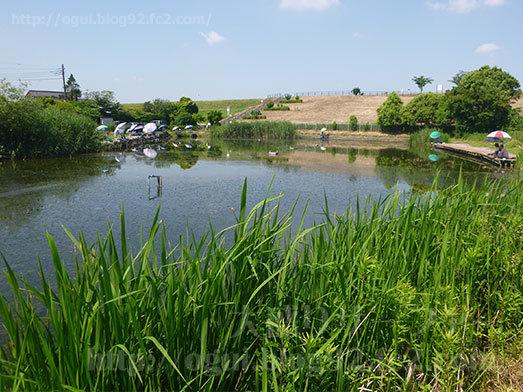 山田うどん近くのまこも池緑地076