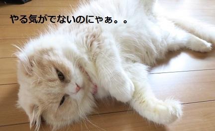 aIMG_0051.jpg