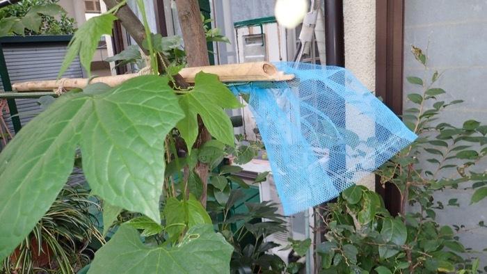 ハキリバチの巣