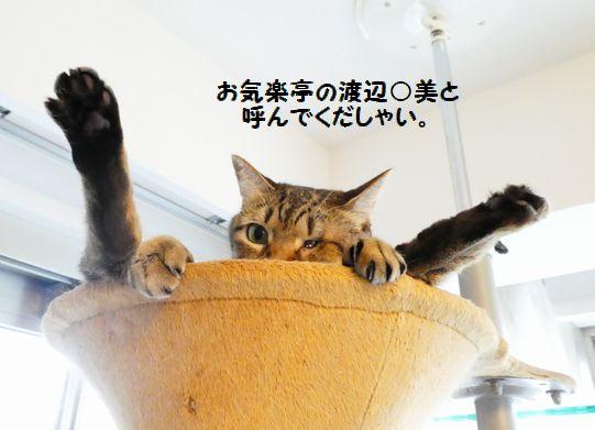 カープ便①