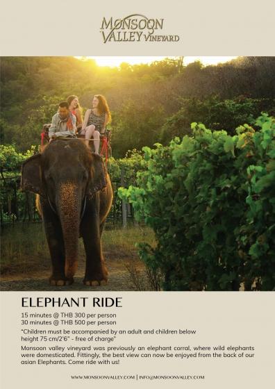 Activities-Elephant20Ride-print.jpg