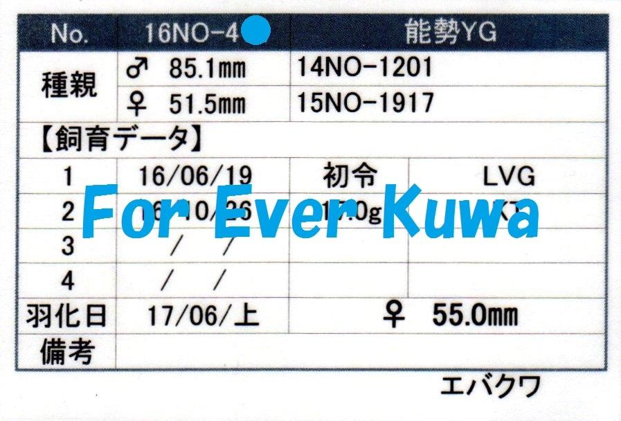 EVKW16NO-412-blog.jpg