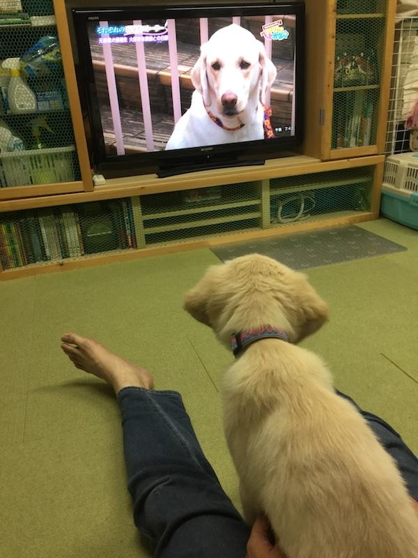 テレビを見てるアルタ