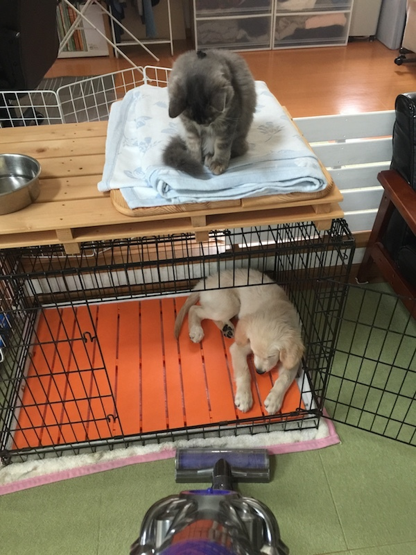 ケージの上は猫が下では犬がうつむいている