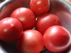 トマトの収穫 2017