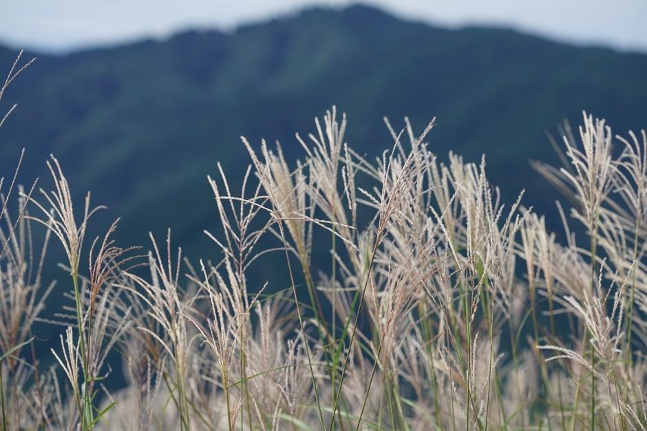 大和葛城山より金剛山を望む20170915cs