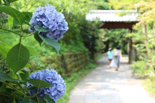 ShirakawaSuigen_007_org.jpg