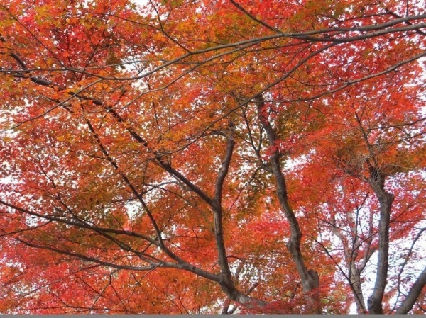 TsuruyamaSyuraku_001_org2.jpg