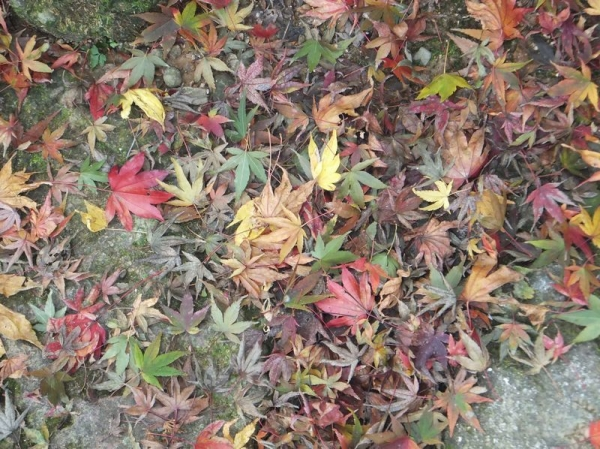 TsuruyamaSyuraku_004_org.jpg