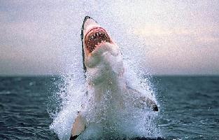 whalesharklink.jpg
