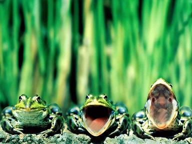 カエル 合唱 2